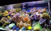 Büyük Resif Güncesi