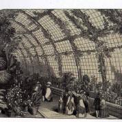 Orkidelerin Batı Kültüründeki Tarihçesi