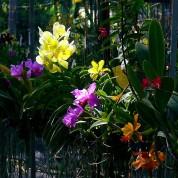 Orkidelerin Tozlaşması