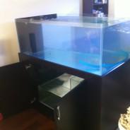 I Found the Aquarium